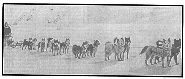 Siberian husky All Alaskan Sweepstakes 1910