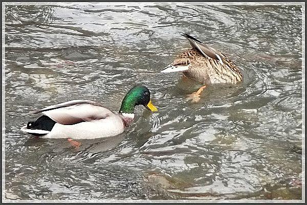 Au bord de l'eau... deux joyeux lurons.