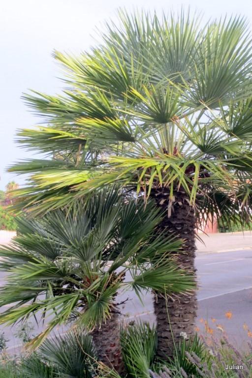 i03--2-palmiers.JPG