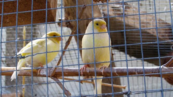 Parc de la Montagne de Reins Juin 2017 (Ferme aux oiseaux exotiques de Athis