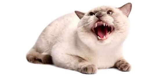 Mon chat est agressif!