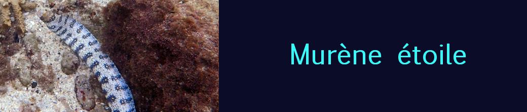 murène étoilée
