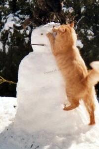 Mon chat Doudou s'attaque à mon bonhomme de neige