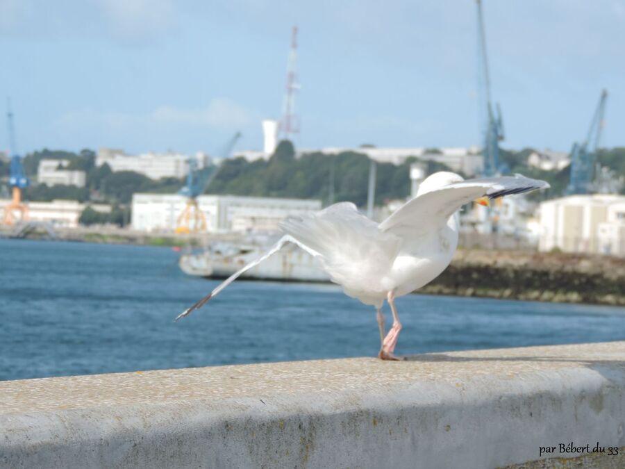 Brest dept 29 - Finistère