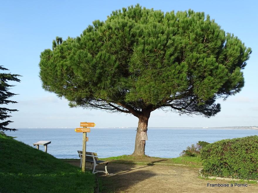 Balade Tharon plage et au Cormier