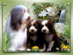 ♥ Heart Vixen ♥ * fille d' Athos fête ses 3 ans