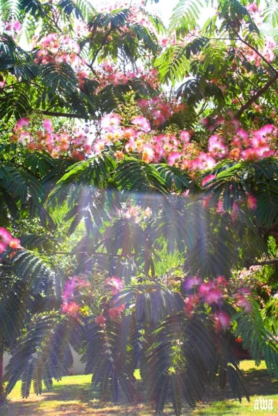 Meli Melo de fleurs d'été !!!