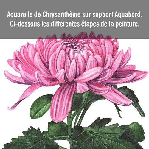 Dessin et peinture - vidéo 3556 : Peindre une fleur de chrysanthème 1/2 - aquarelle.