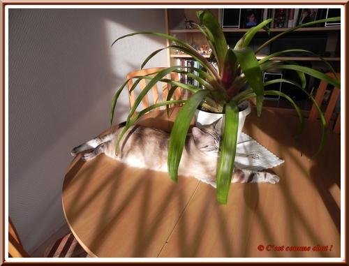 Sous mon palmier