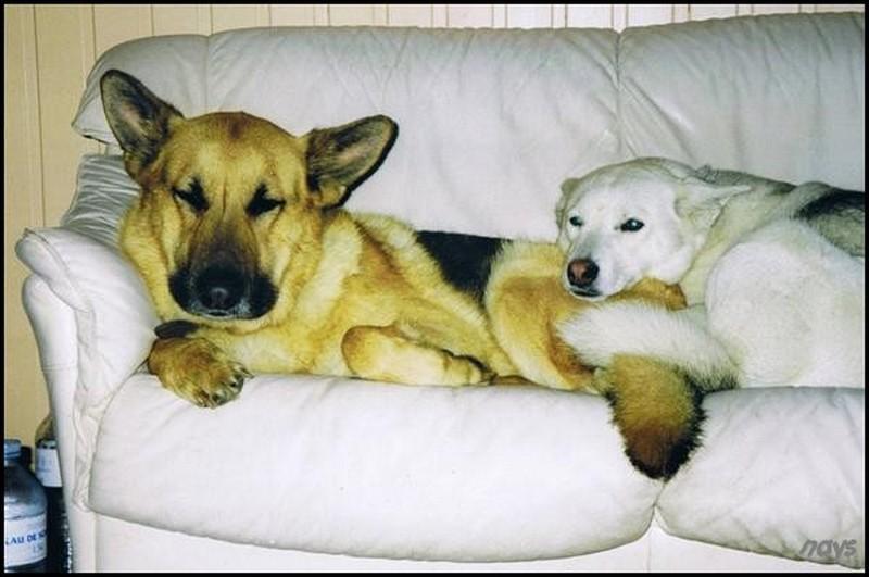 chien,animaux,quiz