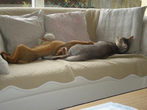Duo sur canapé :