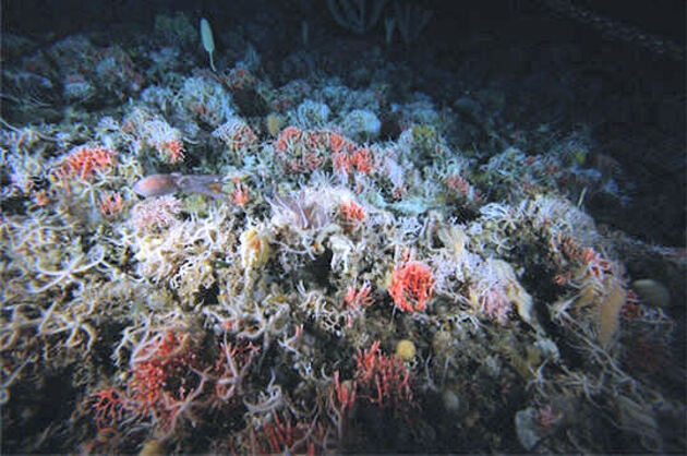 Jardin corallien