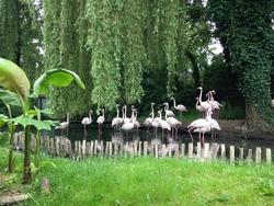 Sortie zoo d'Amnéville