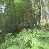 Copie de balade la forêt des heures 013.jpg