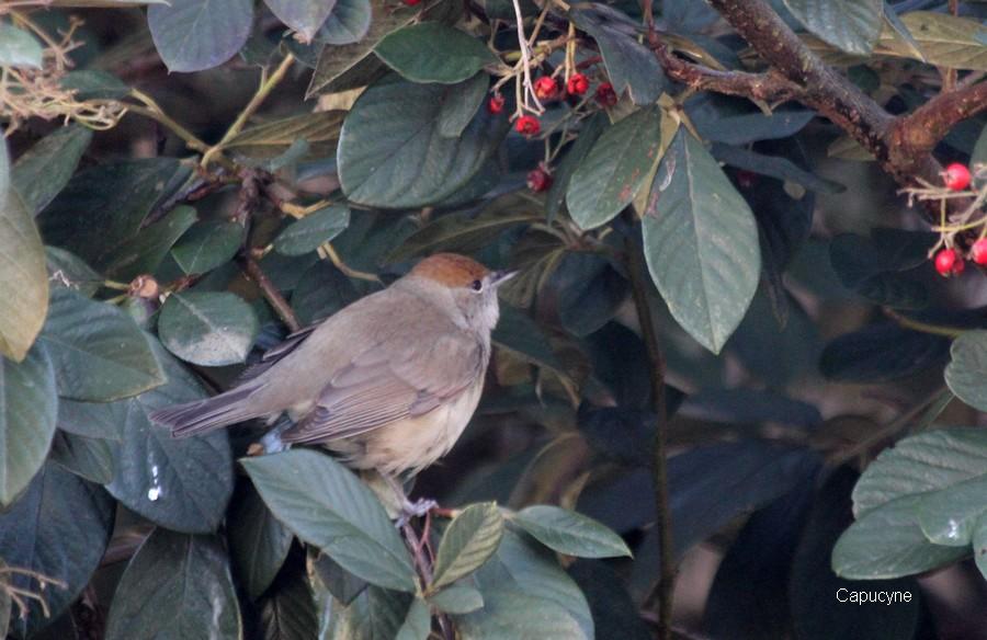 Les oiseaux du jardin : un hiver en demi-teinte