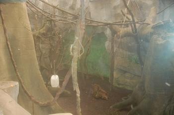 zoo cologne d50 2012 098