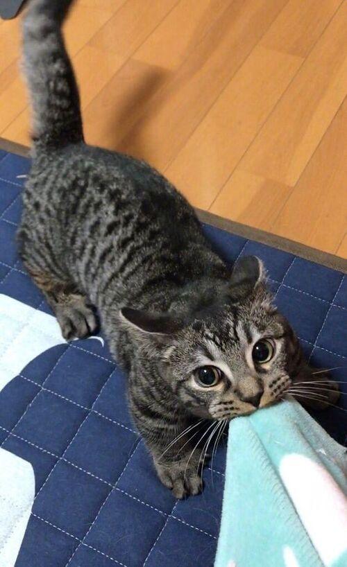 (-*♥*-) Ils sauvent un minuscule chaton, 3 mois plus tard personne n'en croit ses yeux (-*♥*-)