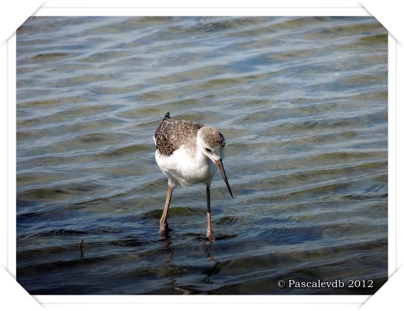 Visite aux oiseaux du Teich - 4/12