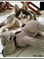 Jasko (4 mois)