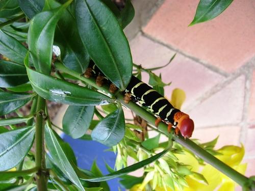 Dans la nature en Martinique