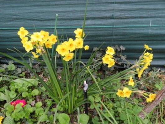 Mon bonheur dans le jardin