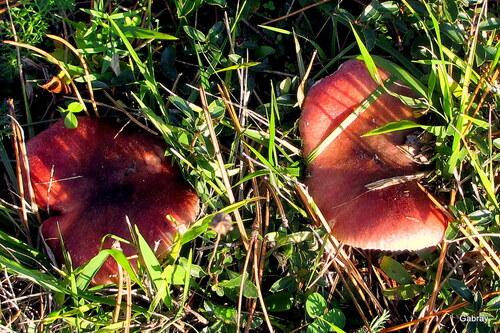 Des champignons en novembre