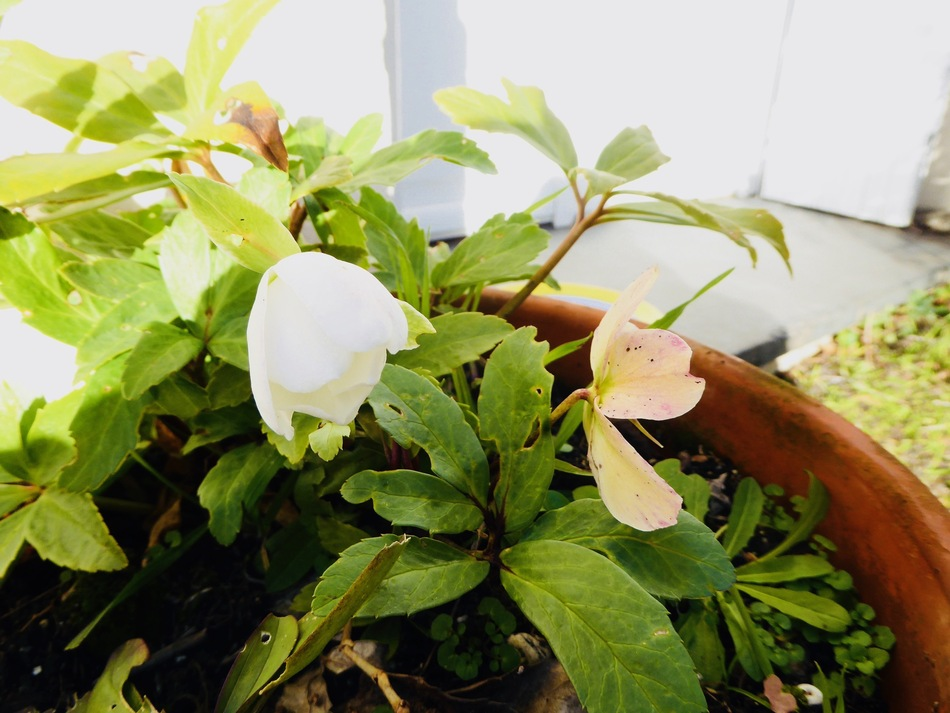 Avant l'hiver un goût de printemps!