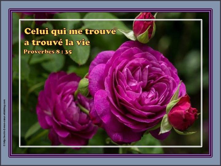 Celui qui me trouve a trouvé la vie - Proverbes 8 : 35