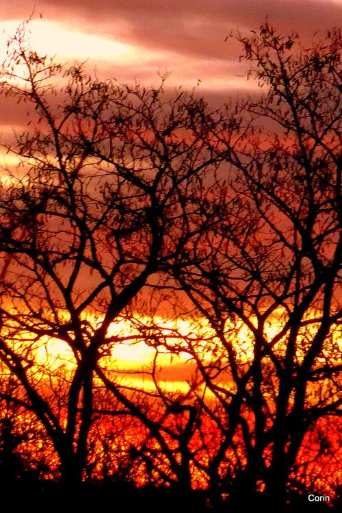 Branches nues d'hiver le soir ... (2)