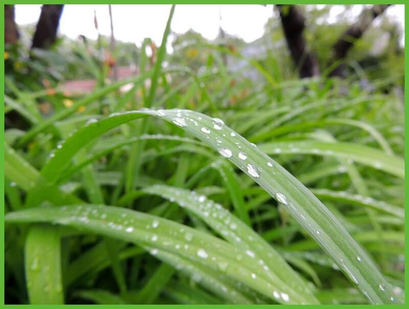 Pluie du WE......