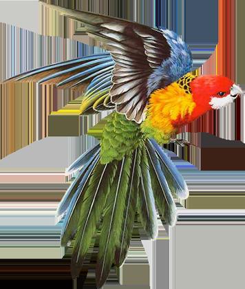 les oiseaux ...    le 21