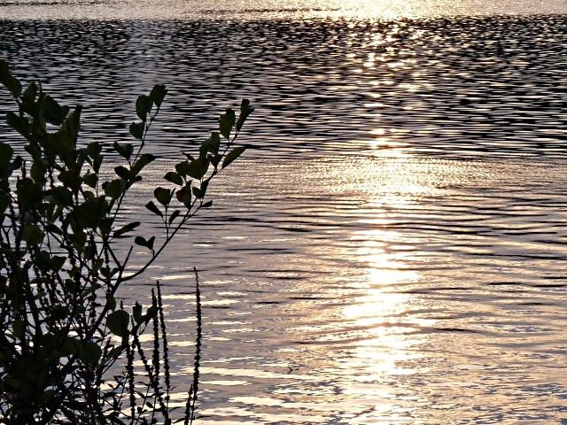 Le plan d'eau de Metz en soirée d'été 4 mp1357 10 09 201