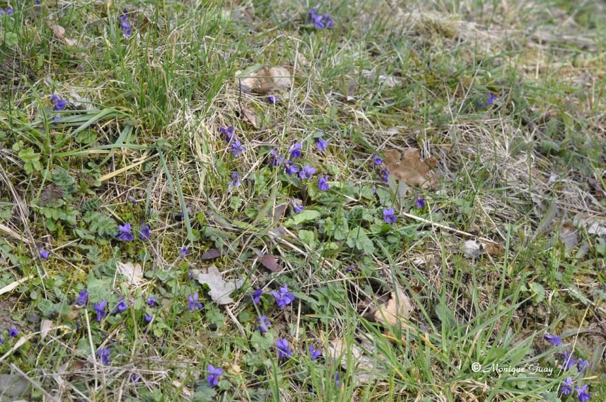 violettes-5832.jpg