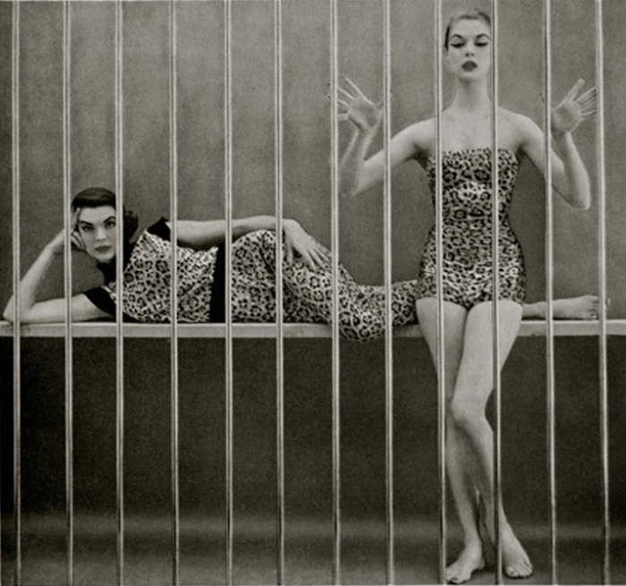 Panthère en cage