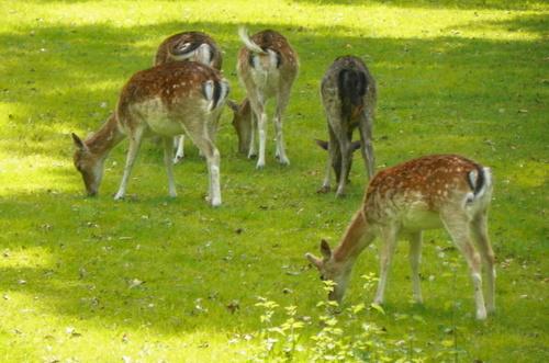 Le parc animalier de la Forêt de Grimbosq