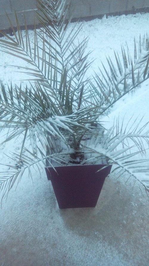 La neige a frappé à Cissé ...