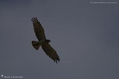 Diversité d'oiseaux 5 - 2014