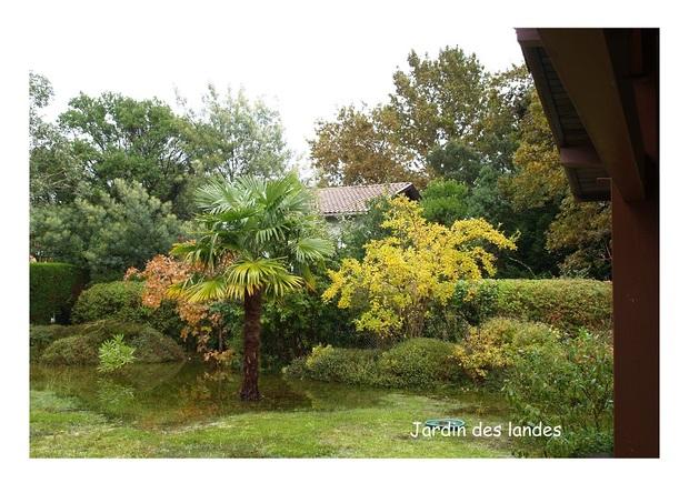 Le jardin en novembre.