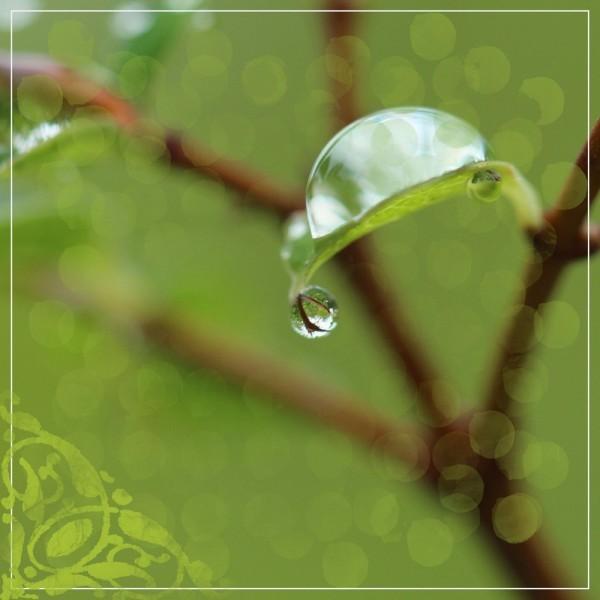 pluie 05