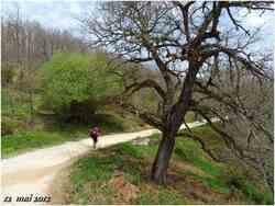 (J38) Agès / Villafranca Montès de Oca 12 mai 2012 (2)