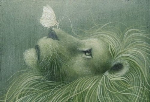 lion-et-papillon-500x342