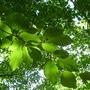 Vert lumière 3