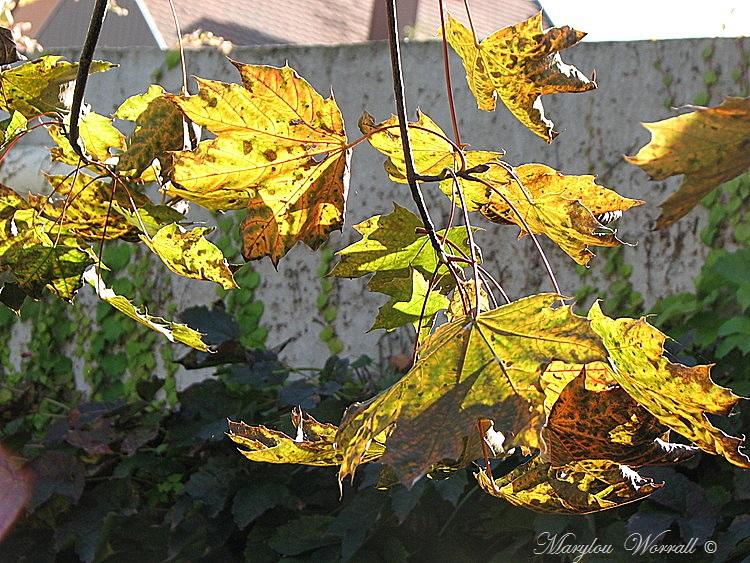 Ingersheim : Quelques beaux restes