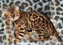 TonioGladys8295753-bw-leopard-peau-arriere-plan-ou-la-texture-grande-resolution