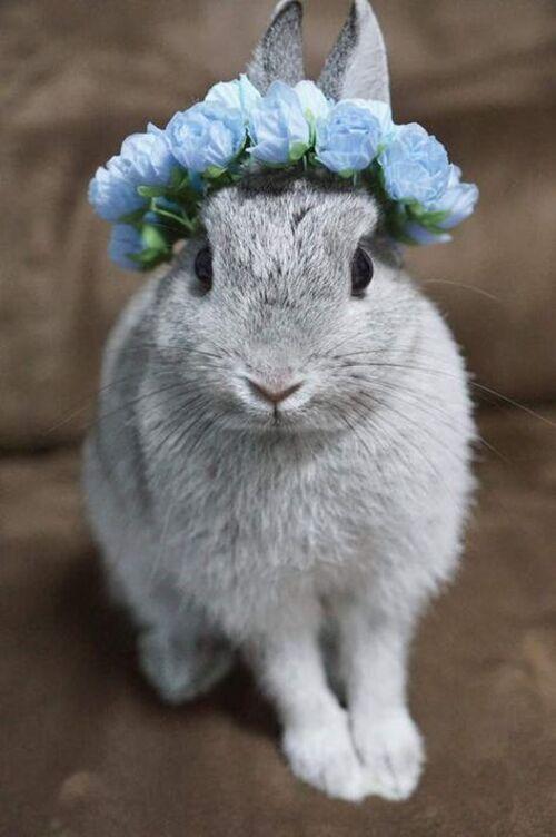 Petits lapins drôles