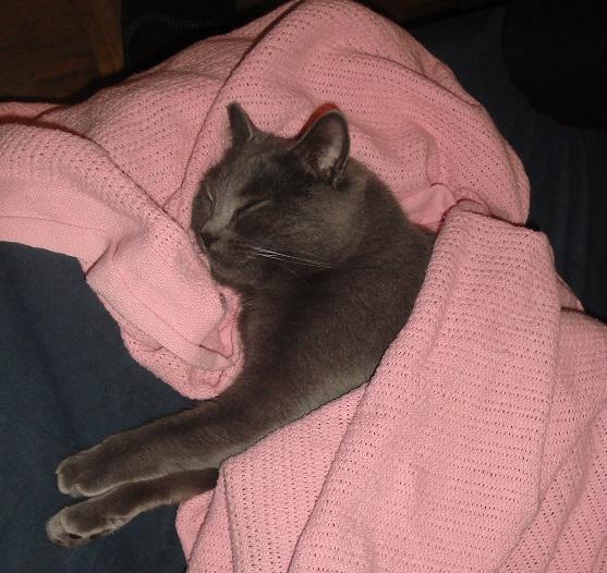C'est dur dur ... la vie de chat
