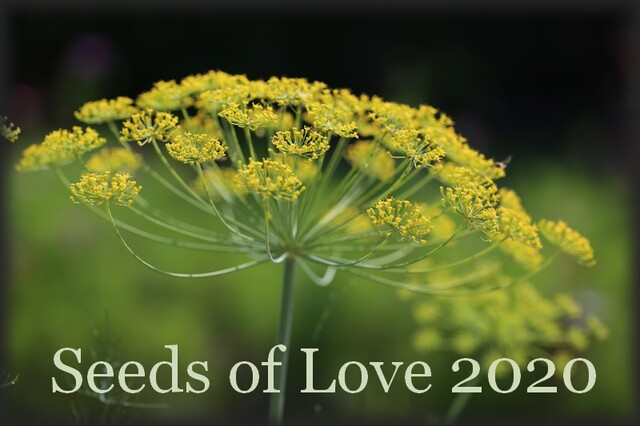 Seeds of Love 2019 - J-6 : quelques consignes importantes