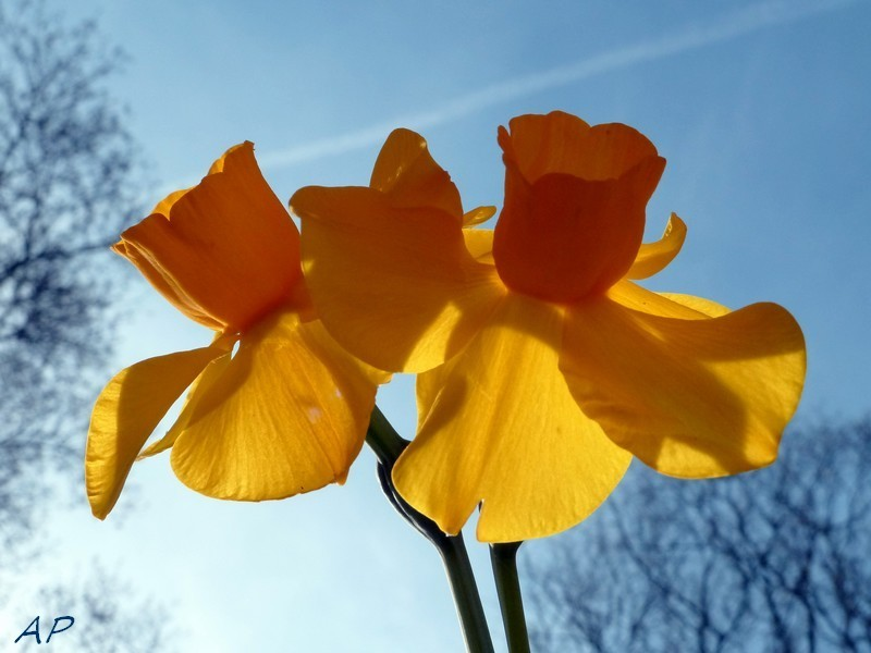 Fleurs lumineuses pour un joyeux week-end