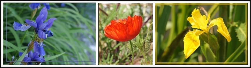 Tryptique fleurs