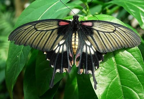 Papillons exotiques au Château de Goulaine